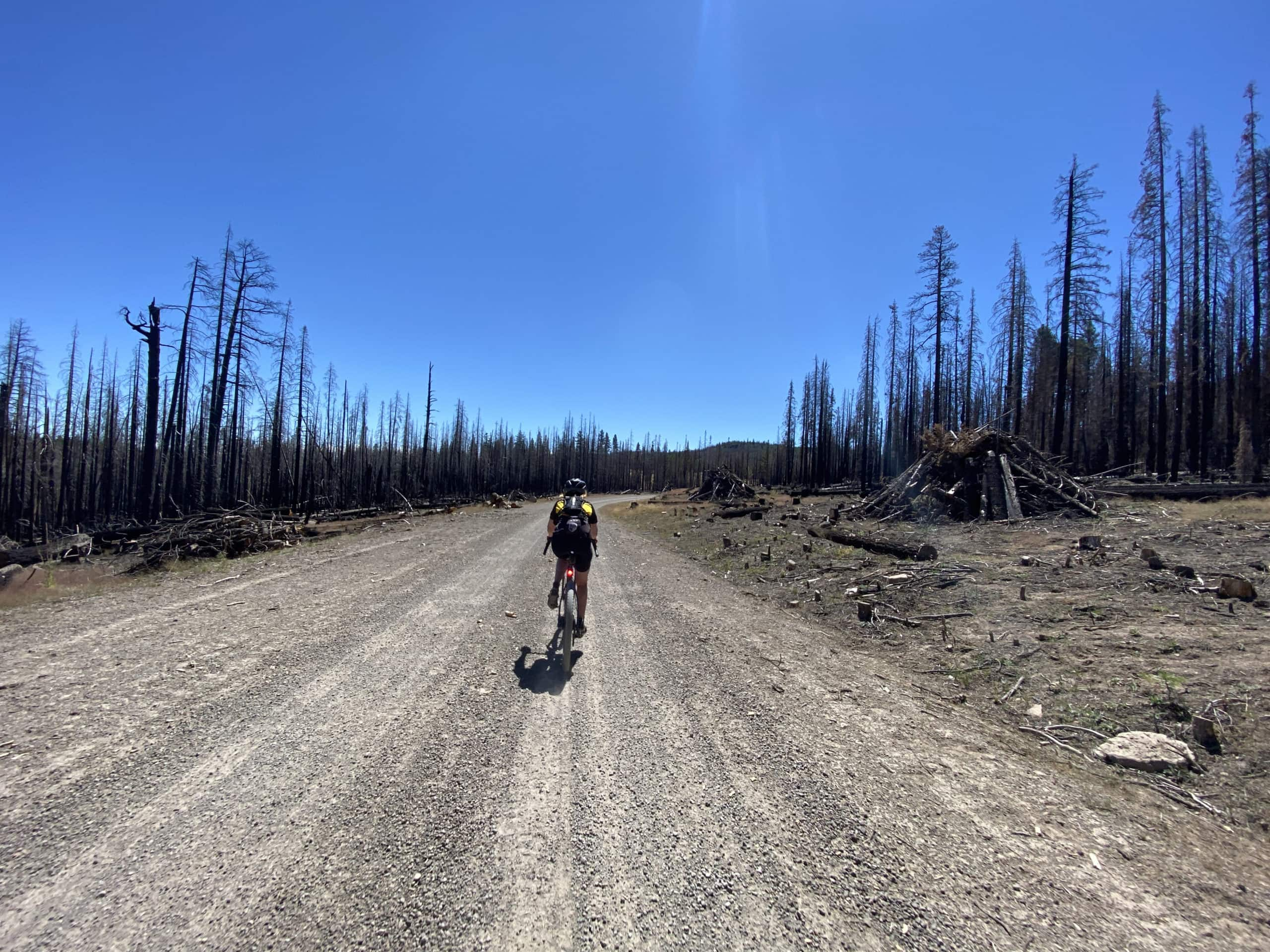 Gravel cyclist on forest service road through the Watson Creek burn in the Fremont National Forest.