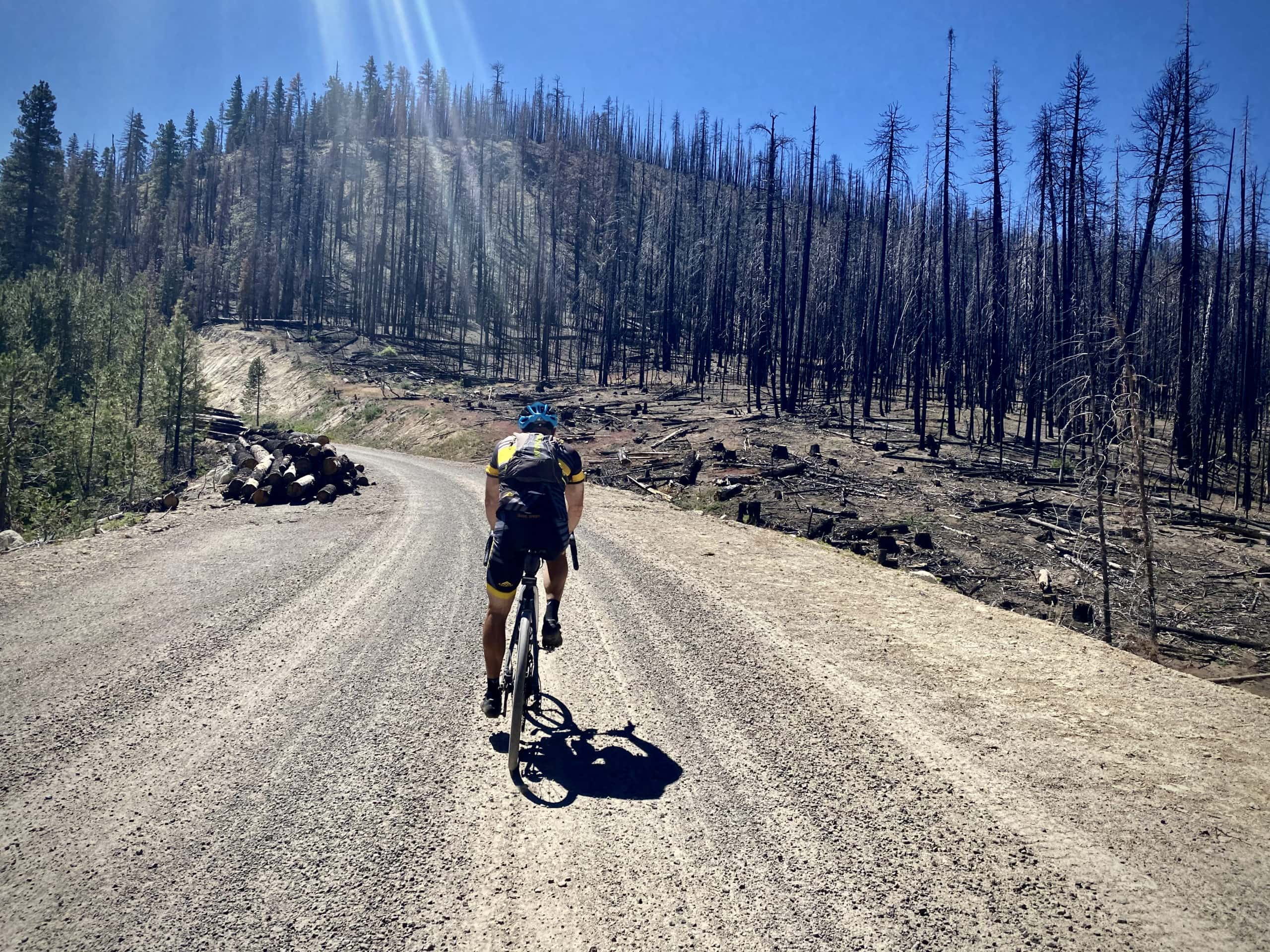 Cyclist on gravel road in the Fremont National Forest where the Watson Creek fire burned.