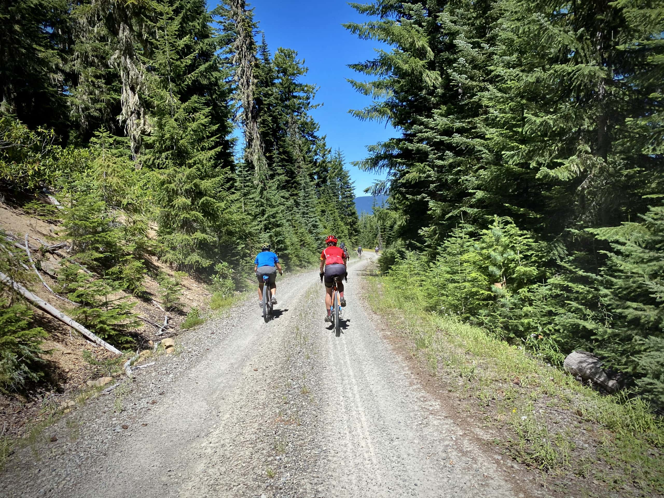 Cyclists riding gravel road in the Umpqua National Forest.