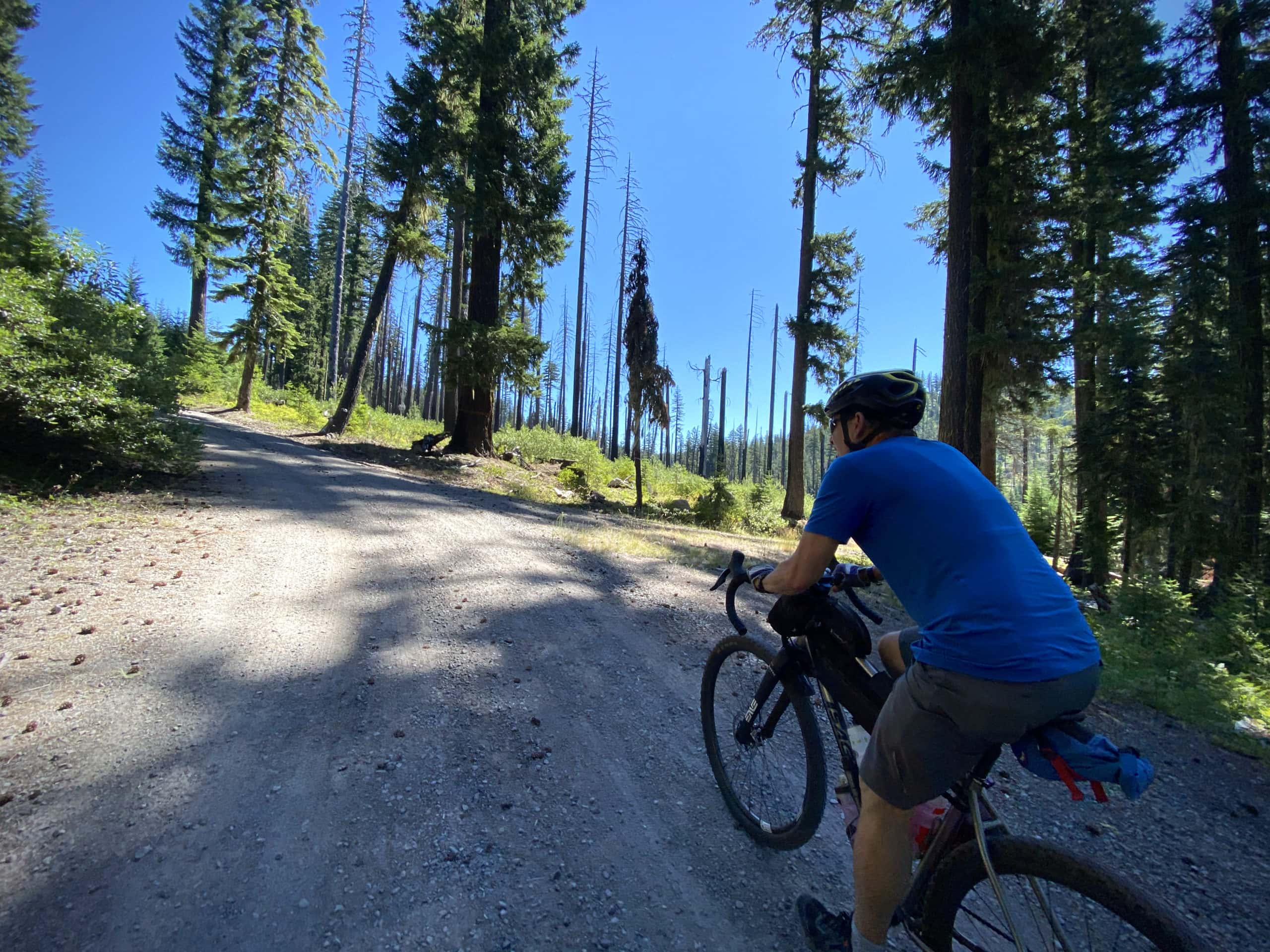 Gravel cyclist climbing up steep pitch through forest in the Umpqua National Forest.