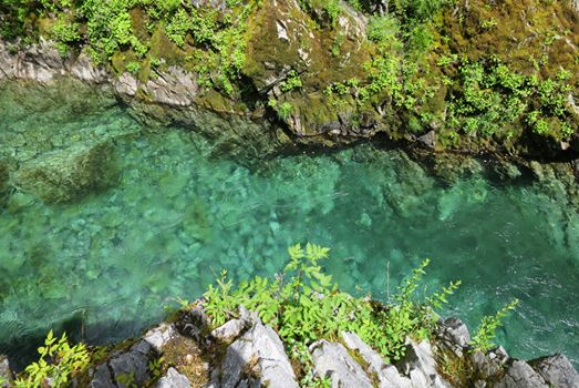 The clear waters of Elk River in the Rogue-Siskiyou National Forest.