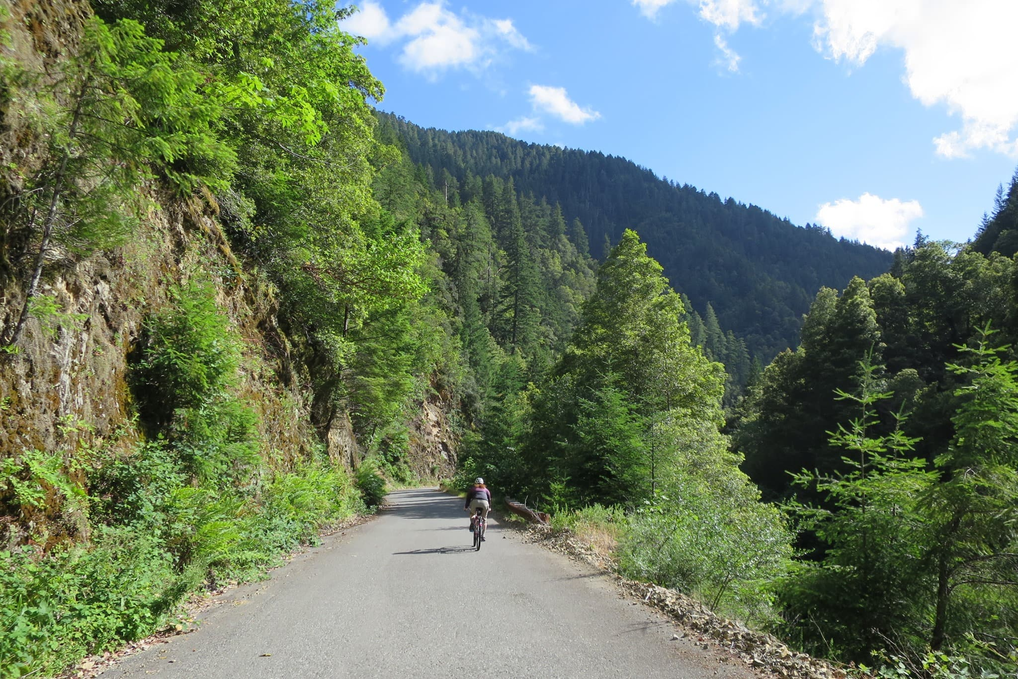 Cyclist riding the road next to the Elk River near the southern coast of Oregon.