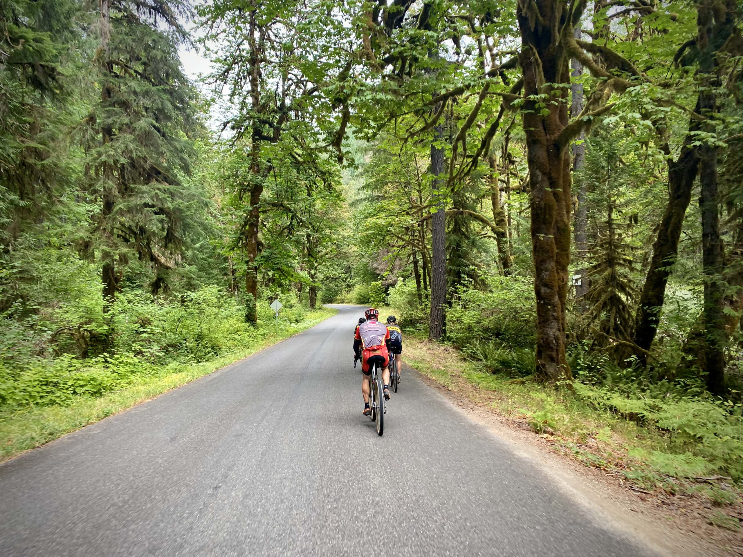 Cyclists nearing Disston, Oregon from the east. In the Willamette National forest.