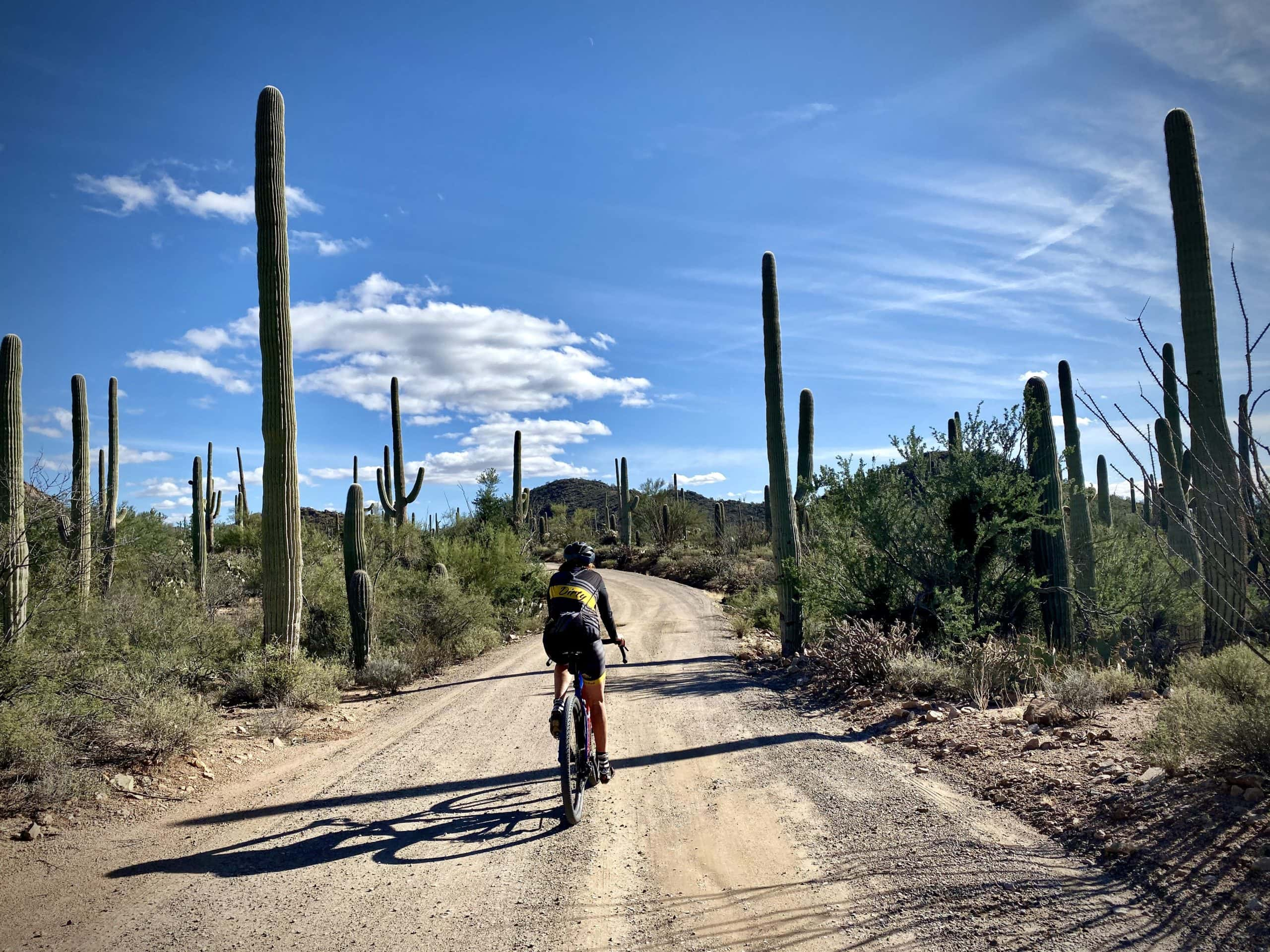 Cyclist on gravel road, climbing, in Saguaro National Park - West.