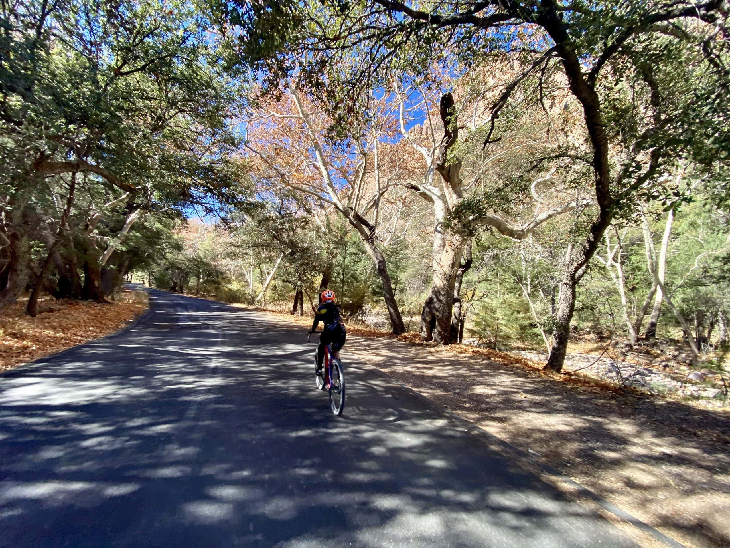 Cyclist under heavy umbrella of trees on Cave Creek Canyon road.