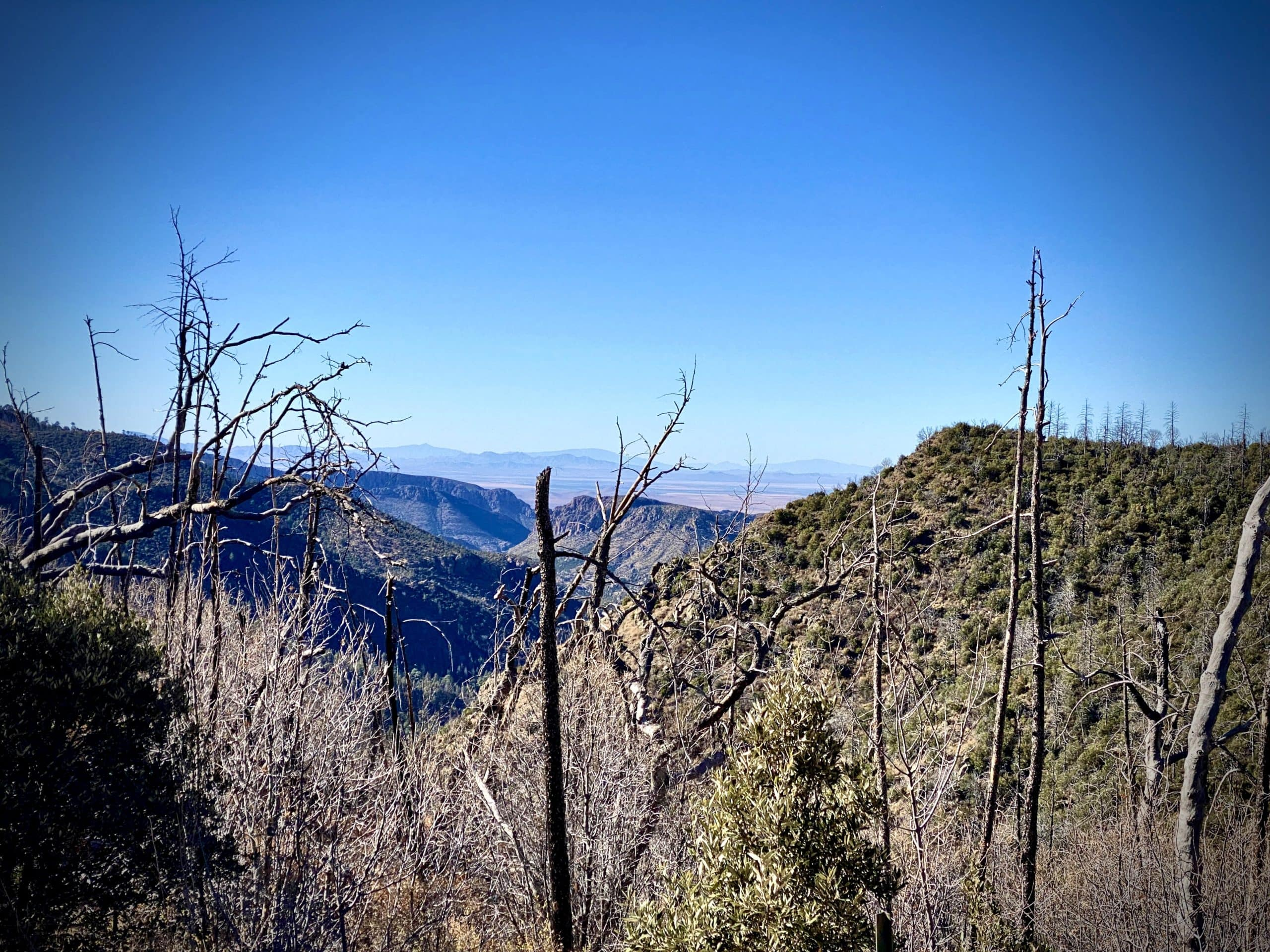 Onion Saddle in the Chiricahua Mountains looking west.