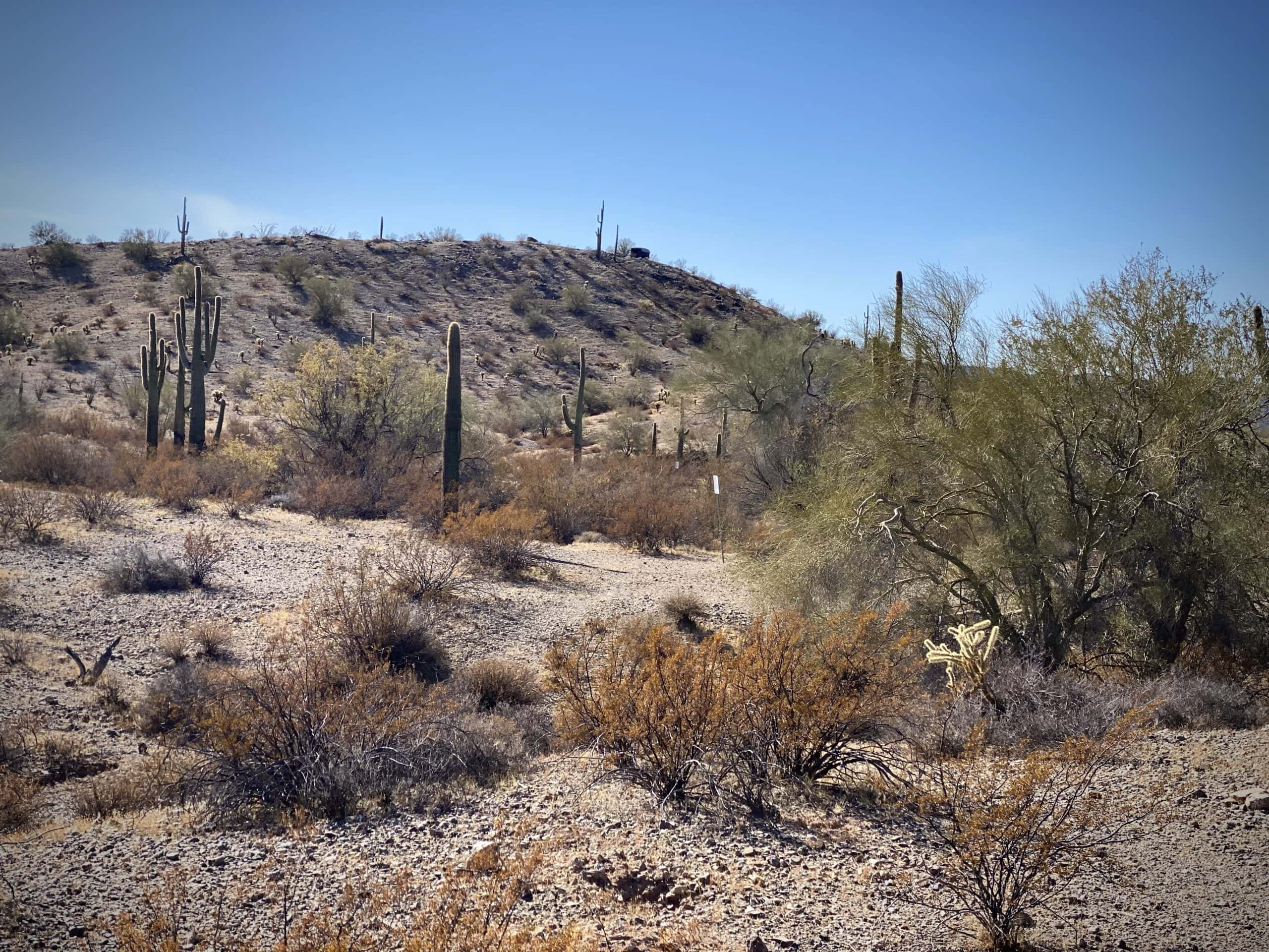 Rat Pack Hill with structure used for Sonoran Pronghorn wildlife management.