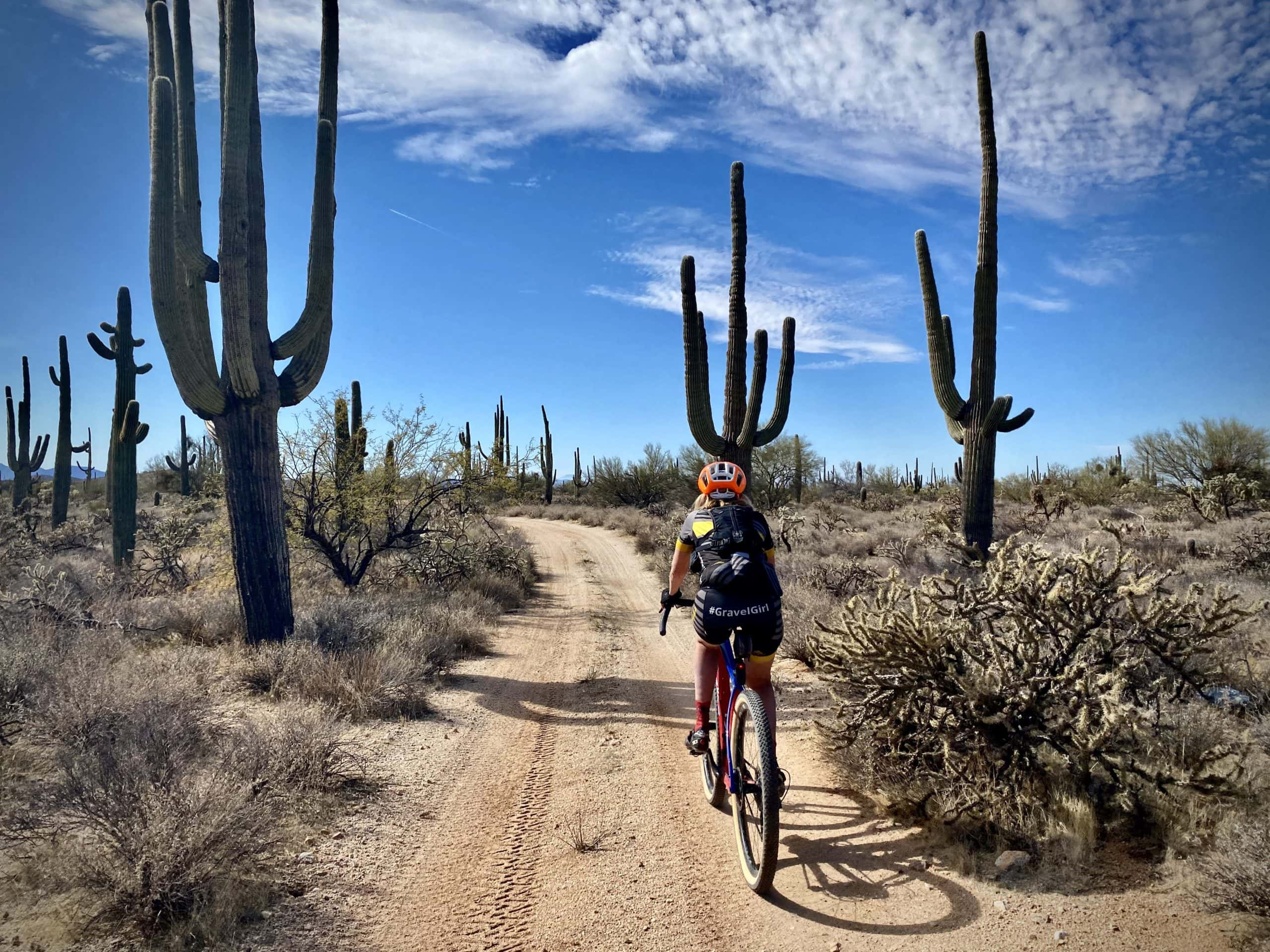Gravel cyclist riding through a Saguaro Cactus forest in the Sonoran desert.