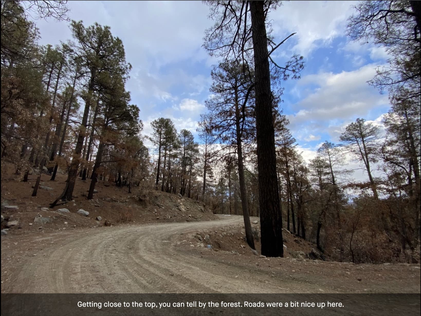 The upper section (gravel) of the Mt Lemmon Control Road in the pine forest.