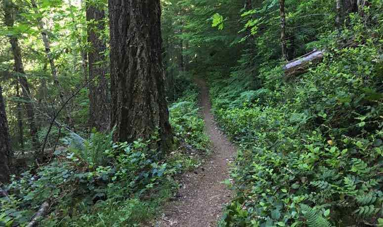 The Timberline to Town Trail.