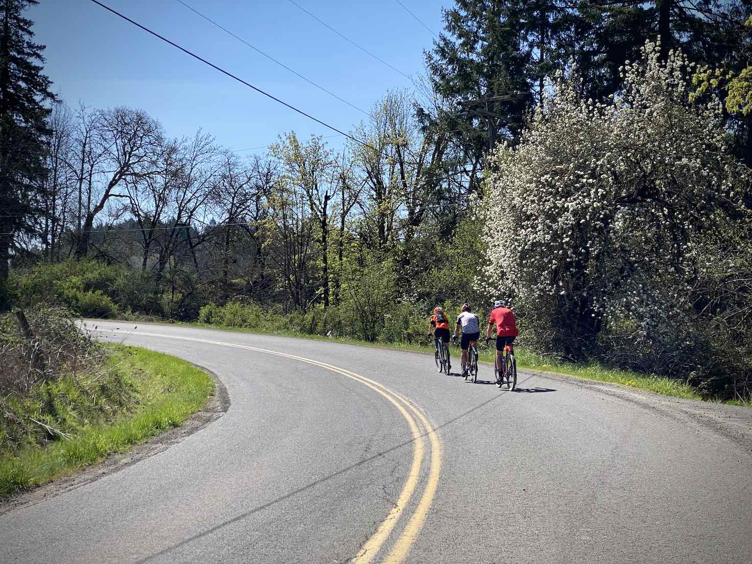 Cyclists on a paved road in the outskirts of Yamhill.