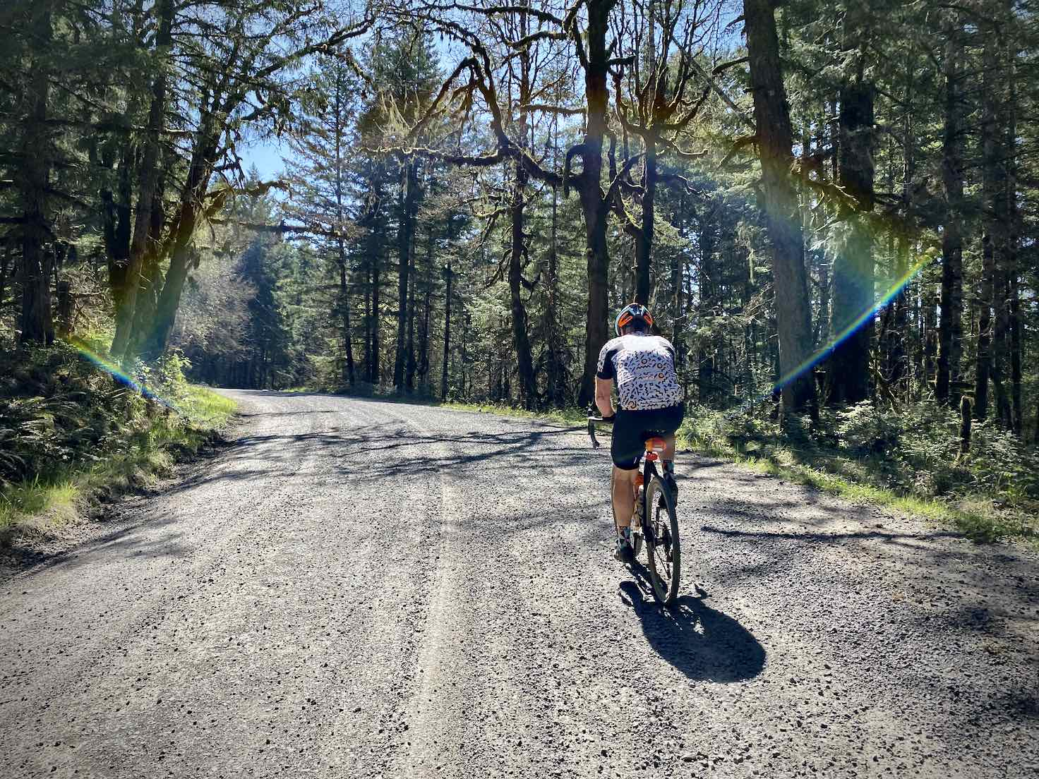Gravel cyclist riding through the timberlands in Yamhill county.