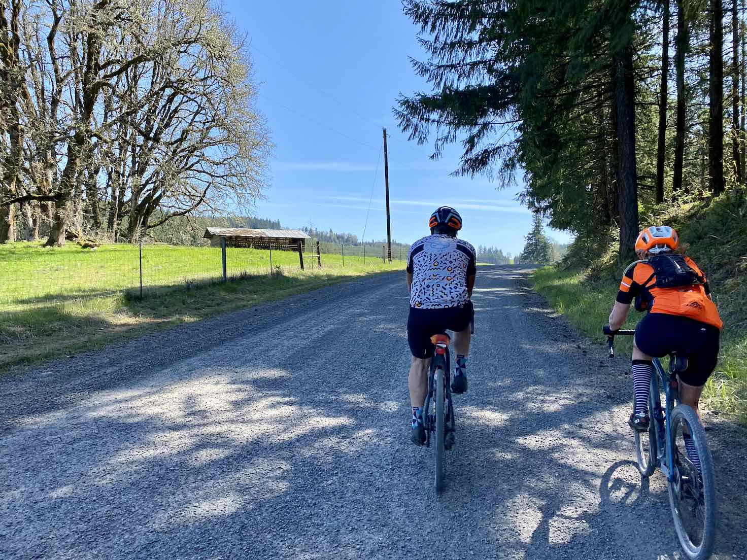 Gravel cyclists on road with slight incline and some trees.