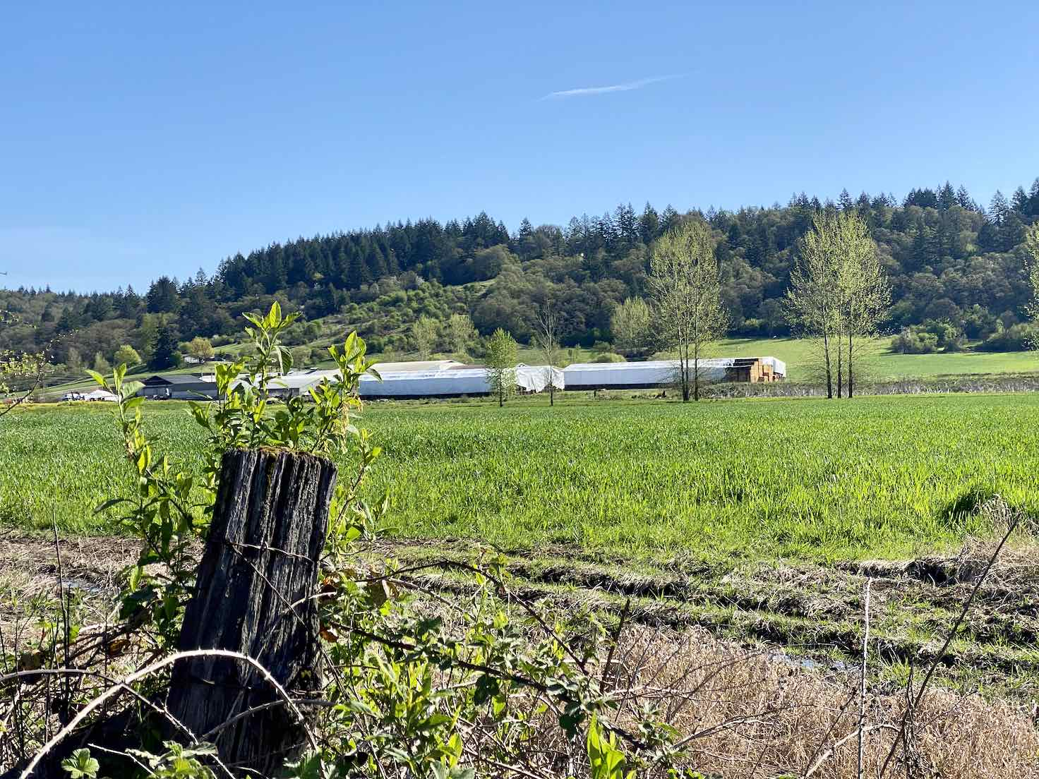 Farm with green fields in Yamhill county.
