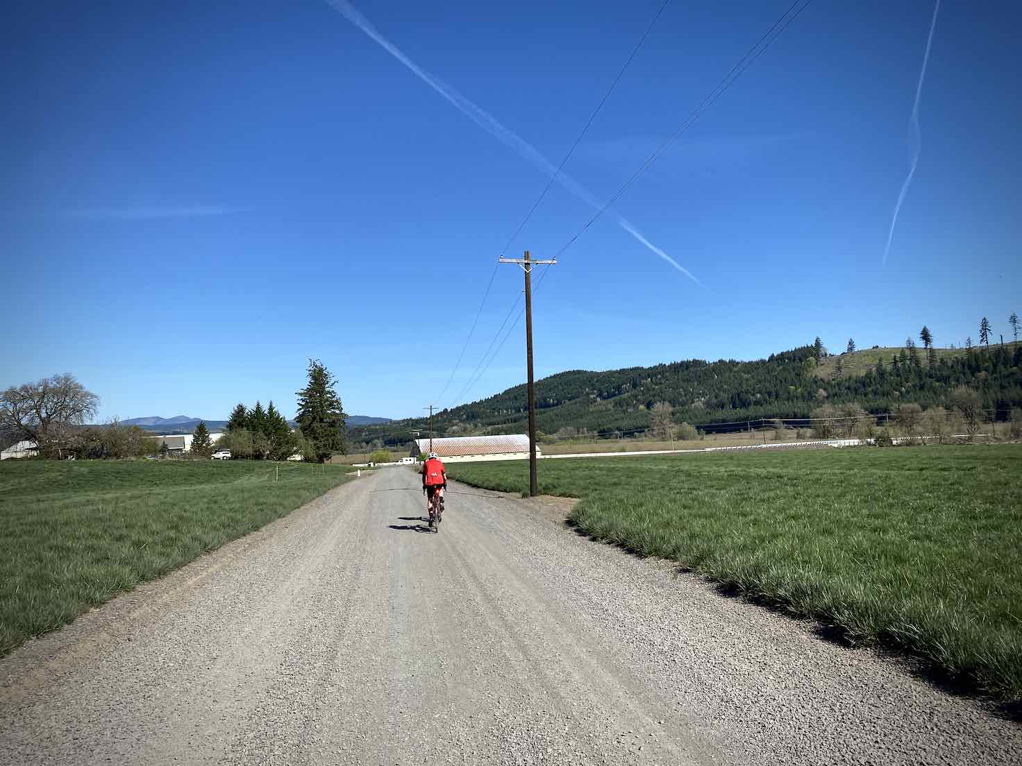 Gravel cyclist riding between fields of green crops near Yamhill, Oregon.