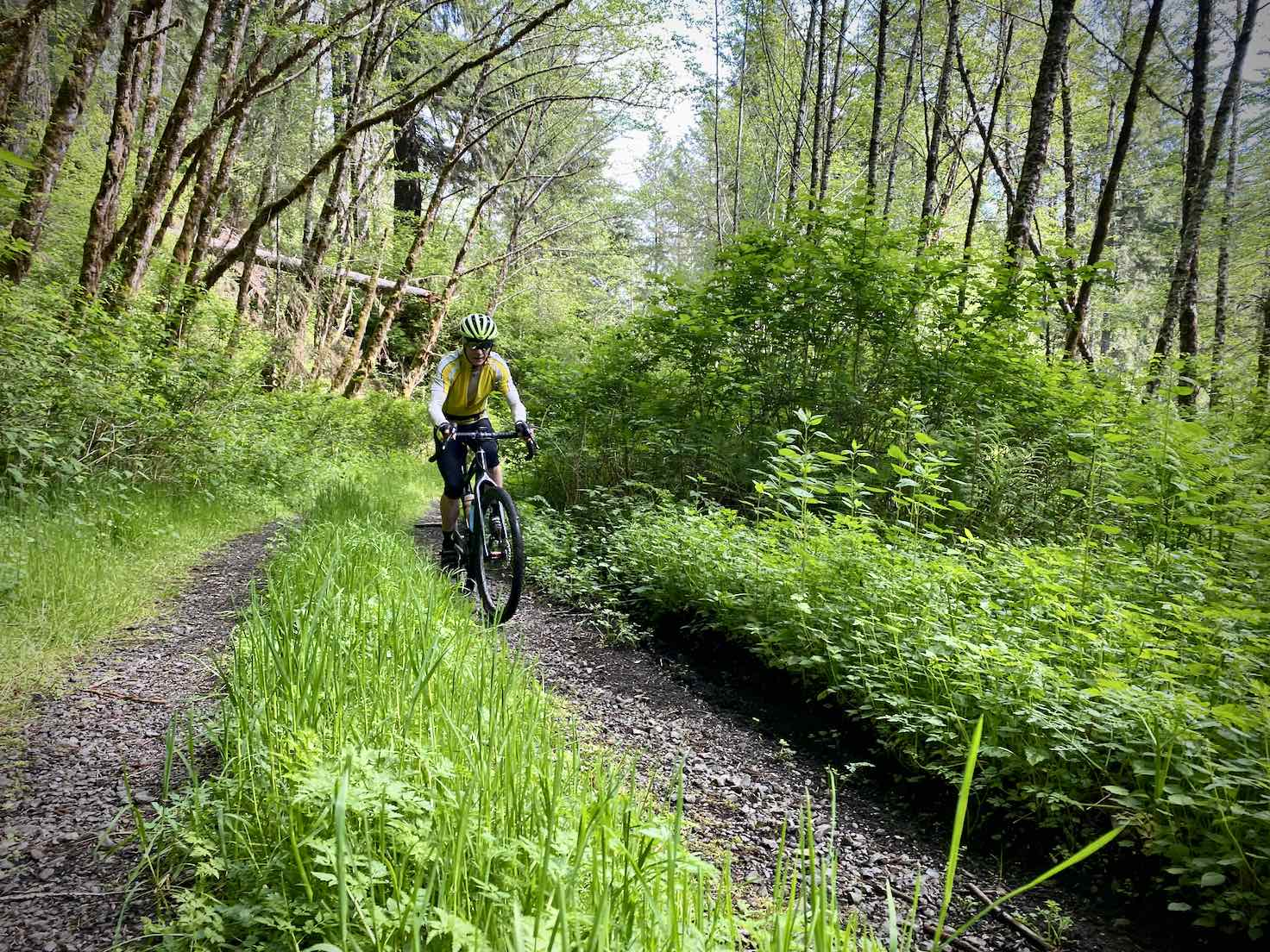 Gravel cyclists on primitive road in the Siuslaw forest.
