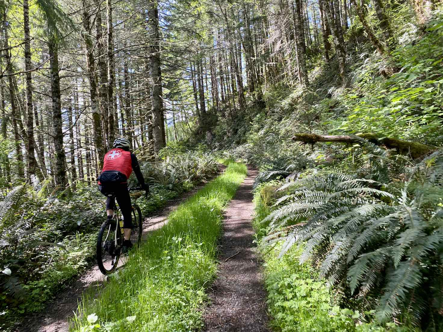 Cyclist on recreation road allowed by Hancock Forest Management.
