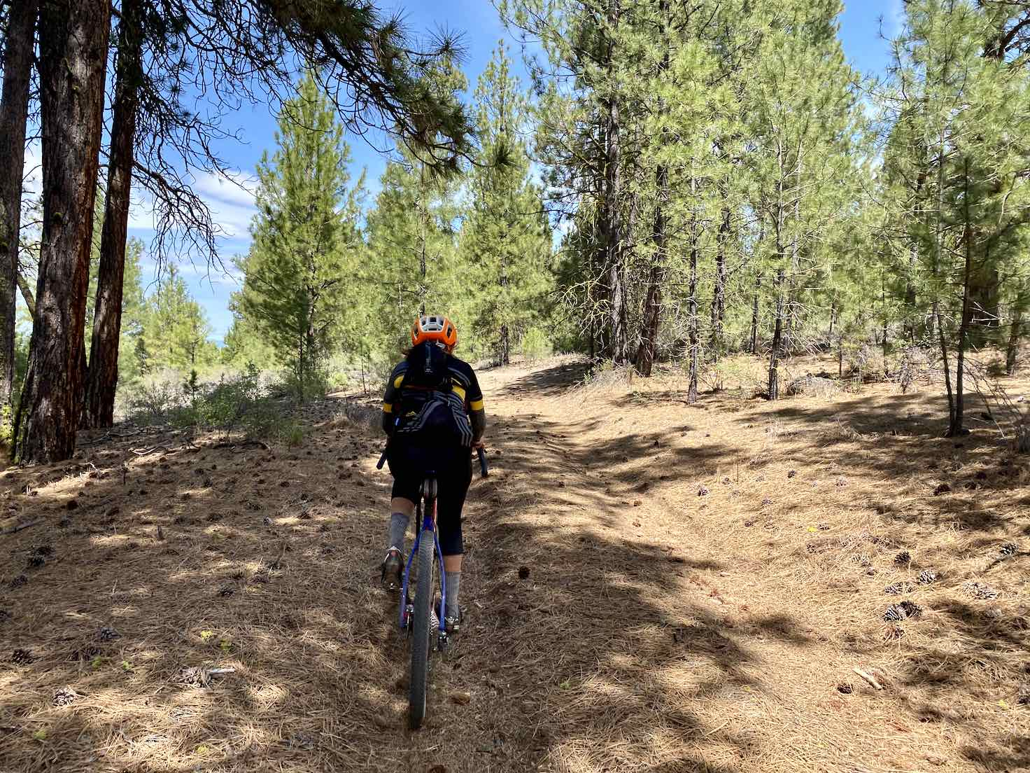 Gravel cyclist on dirt road littered with pine needles in the Winema National Forest.