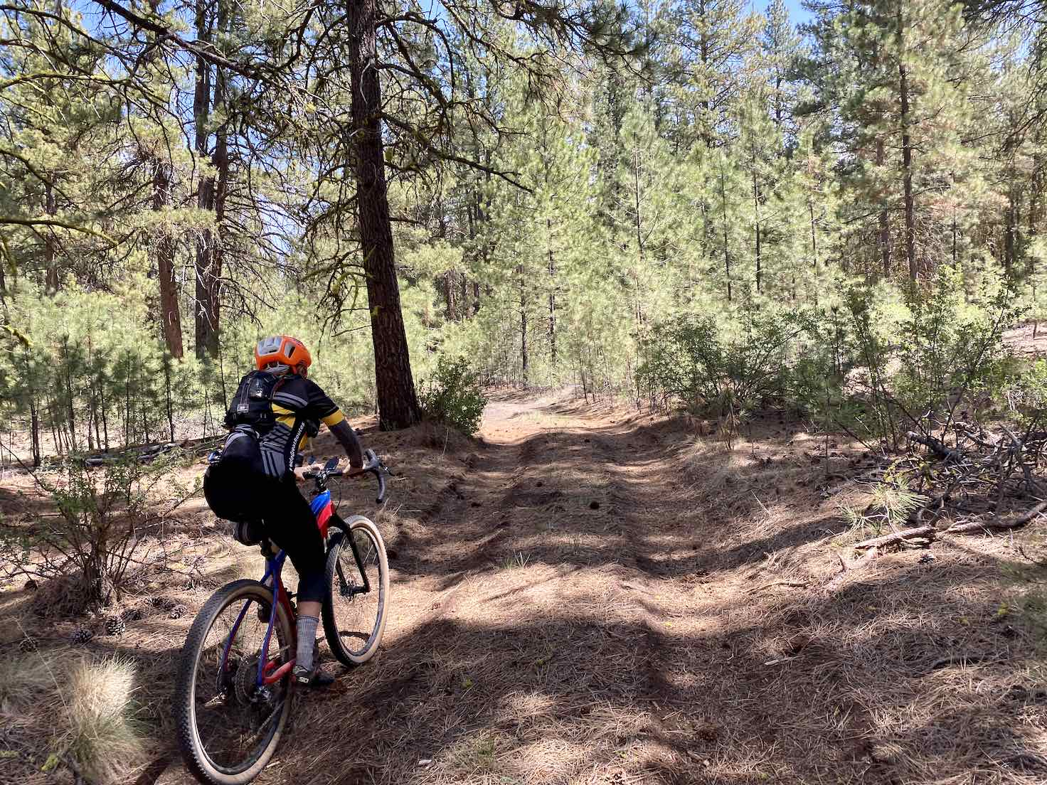 Gravel cyclist on dirt road that is covered in pine needle tuft.