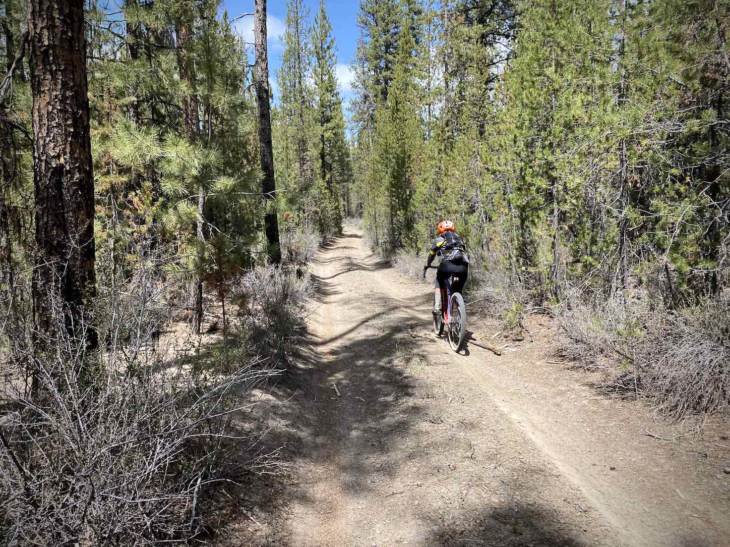 Scrub pine trees and cyclist on dirt road on east side of Klamath Marsh.