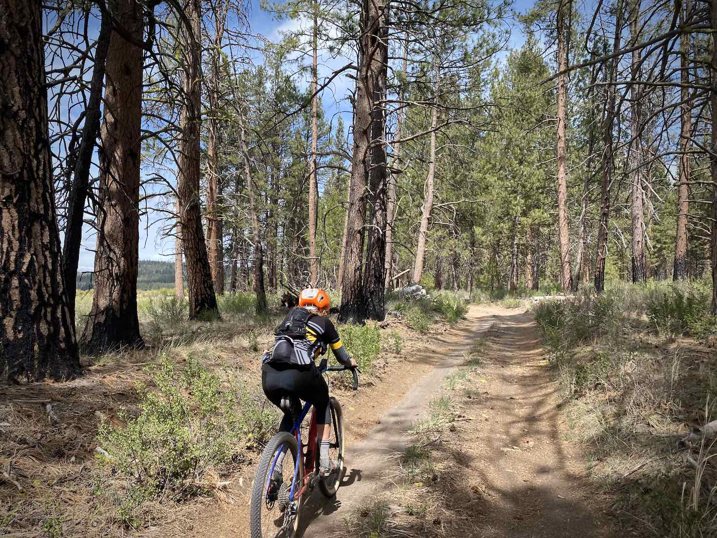Gravel Girl cycling between big Ponderosa trees.