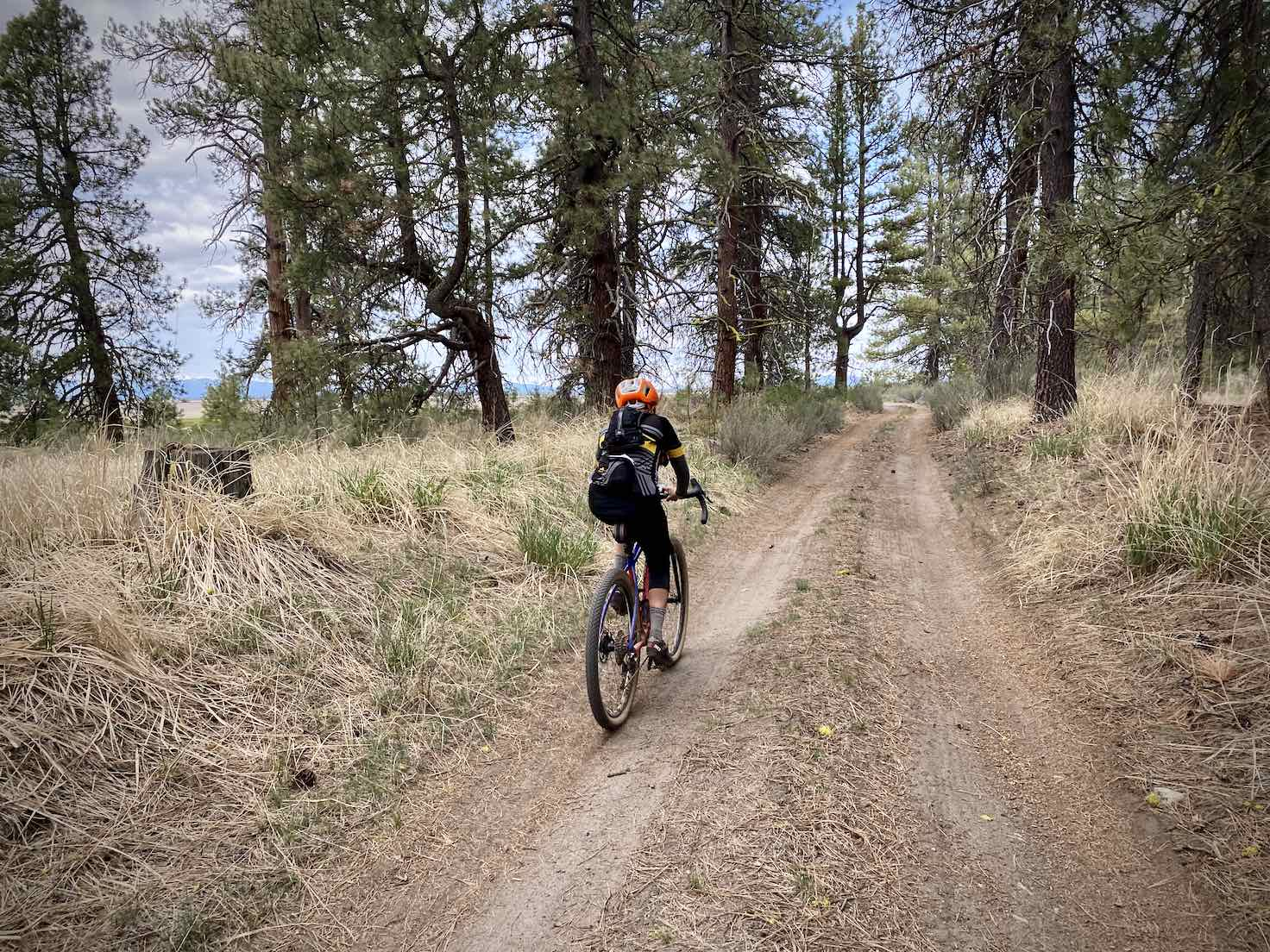 Cyclist riding in forest of big trees and grasses along the marsh near Klamath, Oregon.