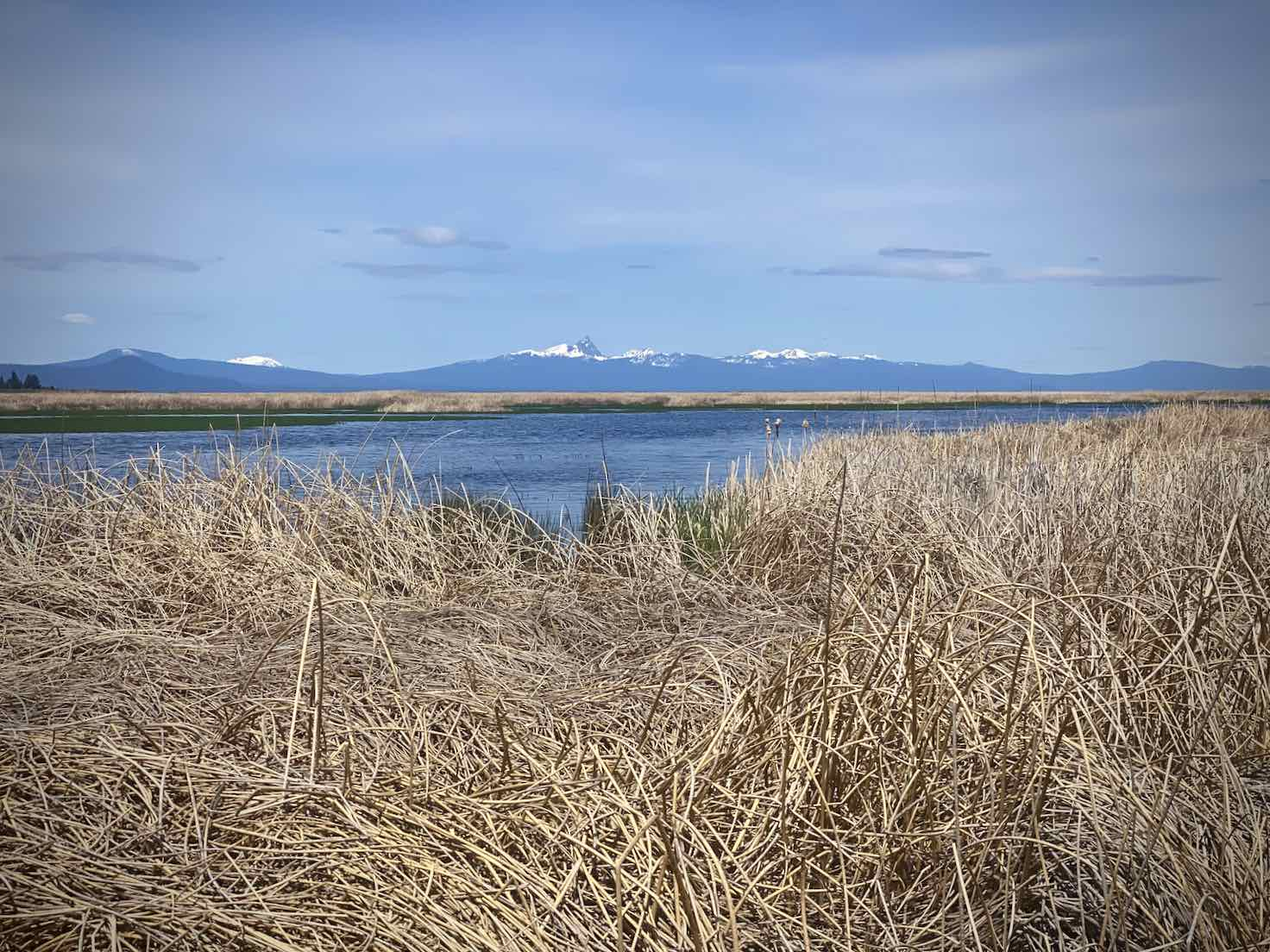 View of Mt Scott across Wocus Bay in Klamath Marsh.