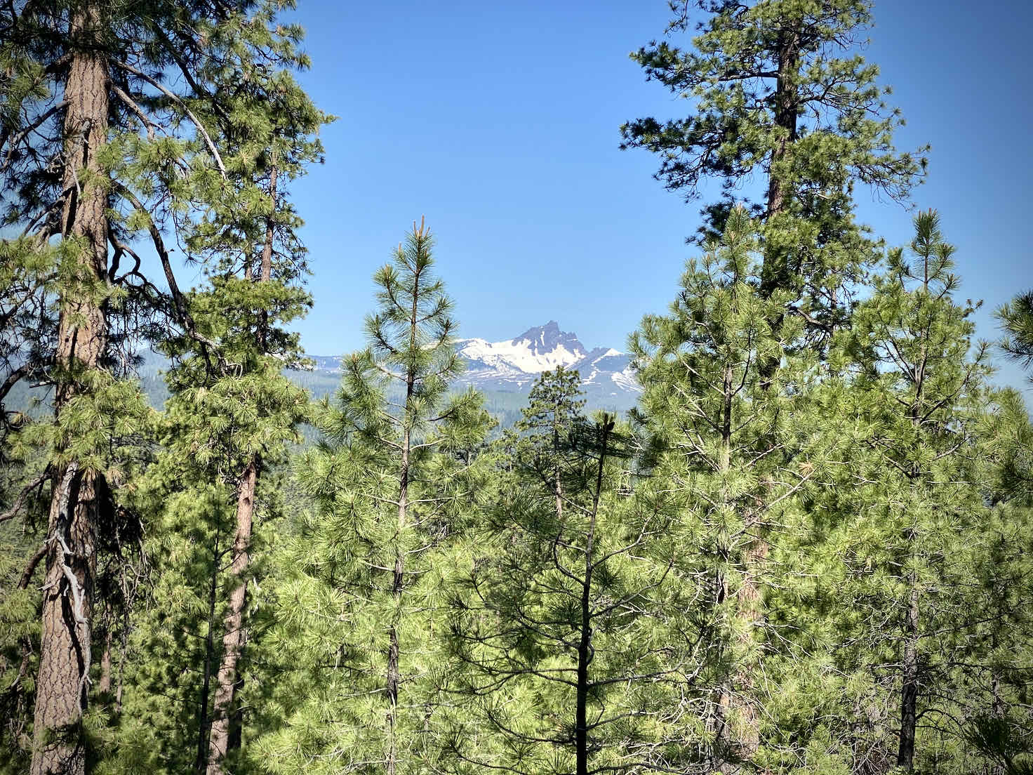 A view of Three Fingered Jack from Black Butte.