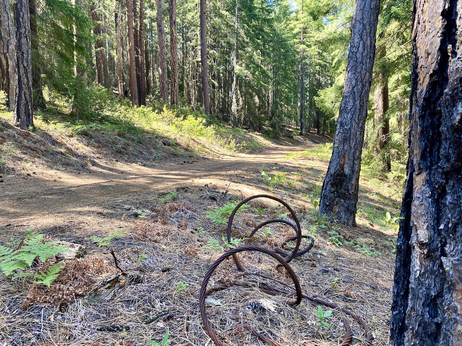 Old logging cable on the forest service roads near Black Butte.