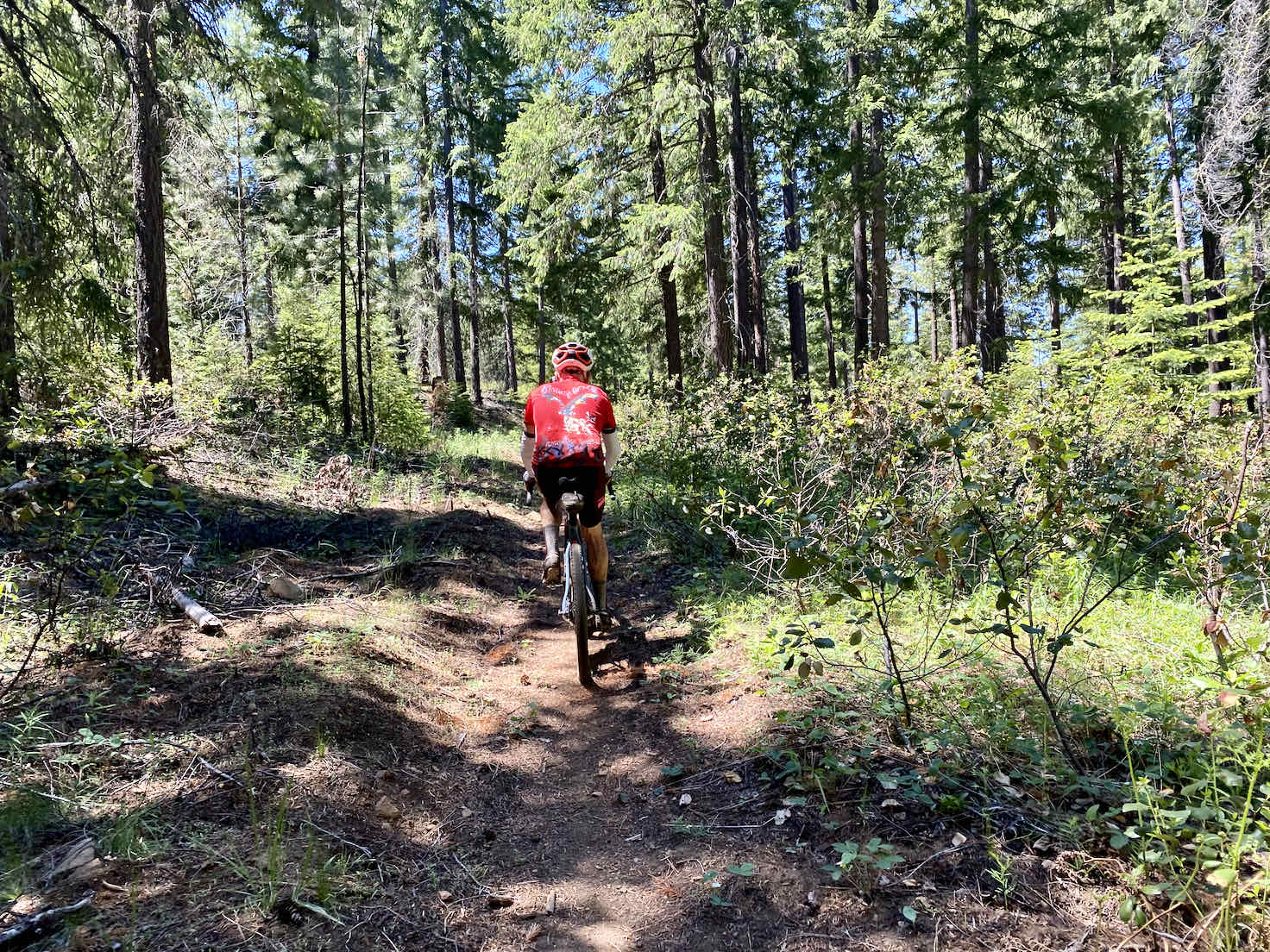 A view of some of the double-track trail along Black Butte with cyclist on trail.